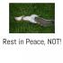 Dead Squirrel by quantumleap