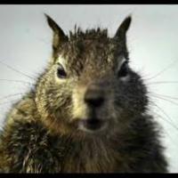 Anti Squirrel League