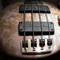 Bassplayer1