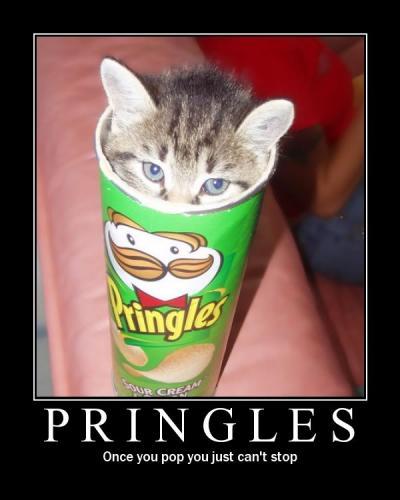 cat_pringles